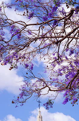 Photograph - Spring Skies by Andrea Mazzocchetti