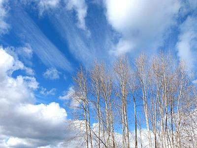 Photograph - Spring Sky And Cotton Trees by Will Borden