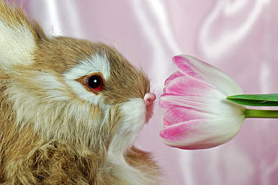 Spring Sniffer Art Print by Maria Dryfhout