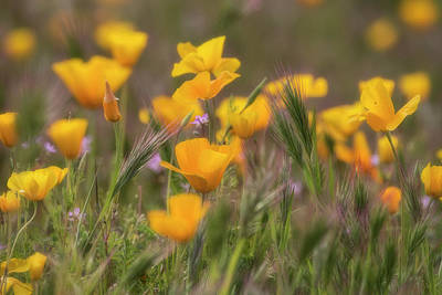 Photograph - Spring Softly Calling  by Saija Lehtonen