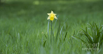 Photograph - Spring Solitude by Tim Gainey