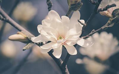 Photograph - Spring Sonnet by Viviana  Nadowski
