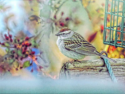 Photograph - Spring Sparrow by Mike Flake