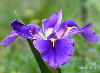 Photograph - Spring Splendor by Maria Urso