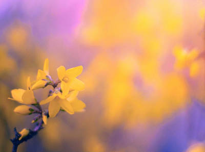 Photograph - Spring Sproing by Susan Maxwell Schmidt