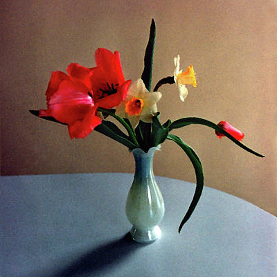 Digital Art - Spring Still Life by Steve Karol