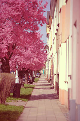 Photograph - Spring Street With Pink Blooming Cherry Trees by Jenny Rainbow