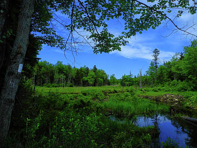 Photograph - Spring/summer Pond by Raymond Salani III