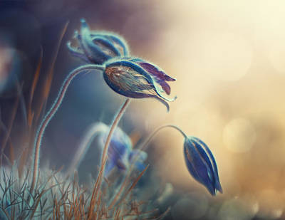 Spring Flowers Photograph - Spring Sunset by Magda Bognar