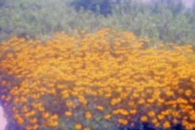 Photograph - Spring Sunshine by Emery Graham