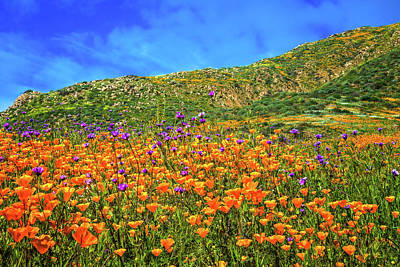 Photograph - Spring Superbloom In Walker Canyon by Lynn Bauer