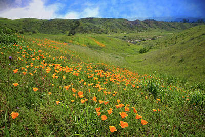 Photograph - Spring Superbloom Poppies In Ventura County by Lynn Bauer