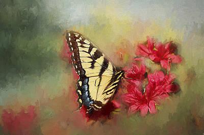 Spring Swallowtail Art Print by Darren Fisher