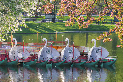 Photograph - Spring Swan Boats by Mike Ste Marie