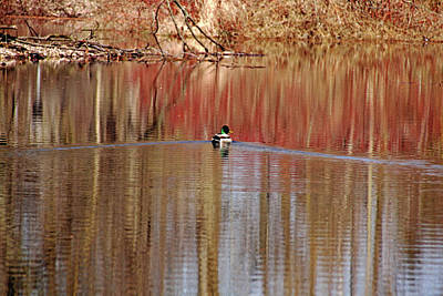 Photograph - Spring Swim by Debbie Oppermann