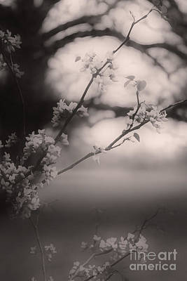 Photograph - Spring Tapestry by Barbara Dean