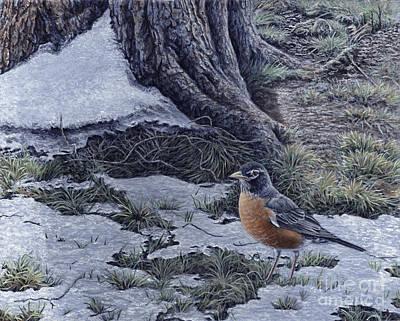 Spring Thaw - American Robin Art Print by Craig Carlson