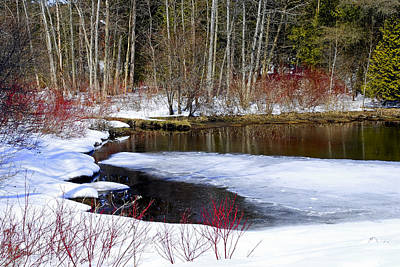 Photograph - Spring Thaw by Robin Webster