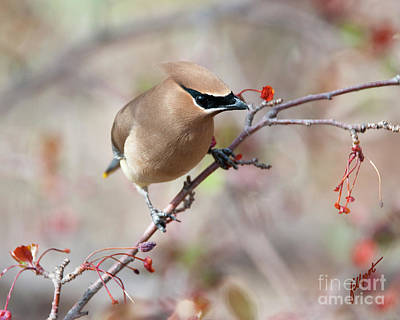 Photograph - Spring Thief by Jim Fillpot