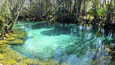 Photograph - Spring Three Of Three Sisters Springs by Judy Wanamaker