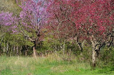 Photograph - Spring Time by Ann Bridges