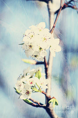 Photograph - Spring Time by Inspirational Photo Creations Audrey Woods