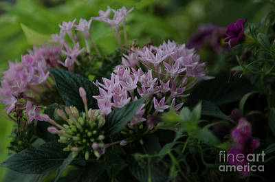 Photograph - Spring Time Basket Of Flowers by Dale Powell
