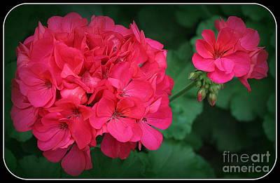 Photograph - Spring Time Geranium by Dora Sofia Caputo Photographic Art and Design