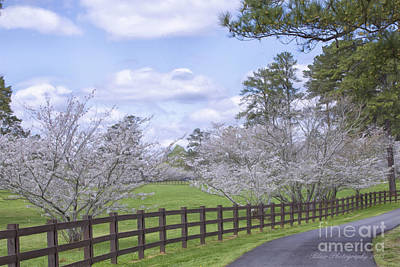 Photograph - Spring Time Glory by Linda Blair