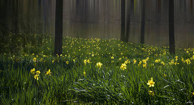 Photograph - Spring Time In North East Texas by Phil Rispin