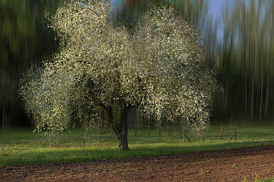 Photograph - Spring Time In The Country 2 by Mike Eingle