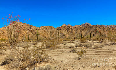 Photograph - Spring  Time In The  Sonoran Desert  by Robert Bales