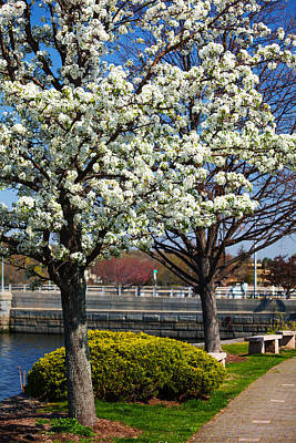 Spring Time In Westport Art Print