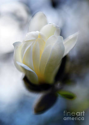Photograph - Spring Time Magnolia Bloom  by Terry Elniski