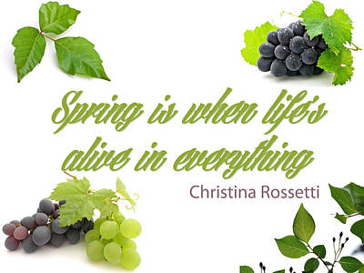 Spring Time Quotes Art Print by Celestial Images