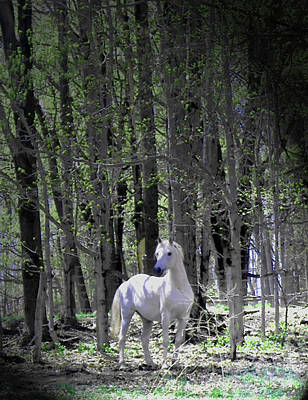 Spring Time With The Stallion Original by Patricia Keller