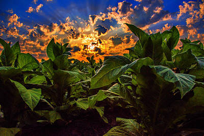 Photograph - Spring Tobacco  by John Harding