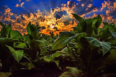 Photograph - Spring Tobacco  by John Harding