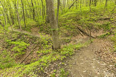 Wyalusing Photograph - Spring Trail Scene 10 by John Brueske