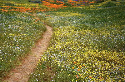 Art Print featuring the photograph Spring Trail Through A Sea Of Wildflowers At Diamond Lake In California by Jetson Nguyen