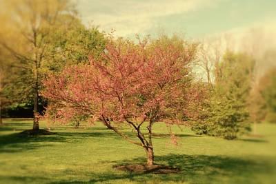 Photograph - Spring Tree by Angie Tirado