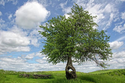 Photograph - Spring Tree by Donna Doherty