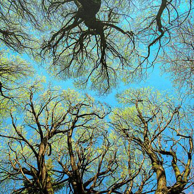 Photograph - Spring Trees by Vladimir Kholostykh