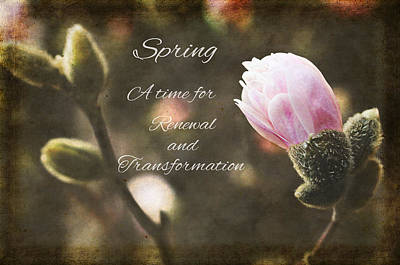 Photograph - Spring by Trina Ansel