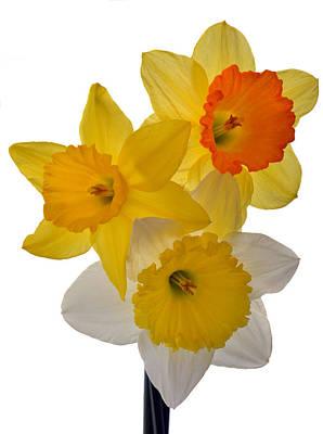 Spring Trio Original by Terence Davis