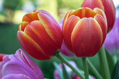 Photograph - Spring Tulip Bouquet by Arlene Carmel