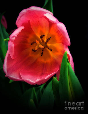 Scifi Portrait Collection - Spring Tulip by Donna Cain