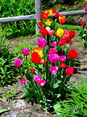 Photograph - Spring Tulips #3 by Ed Weidman