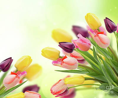 Photograph - Spring Tulips  by Anastasy Yarmolovich
