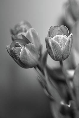 Photograph - Spring Tulips by Elvira Pinkhas